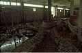Life Science Corner Under Construction - Dynamotion Hall - Science City - Calcutta 1996-07-30 325.JPG