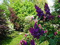 Lilac and garden (326398053).jpg