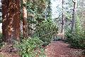 Lithia Park - Ashland, Oregon - DSC02750.JPG