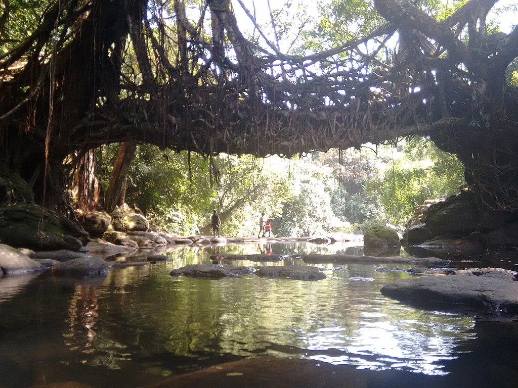 Living roots bridge near Mawlynnong