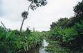 Llanosmarsh1.jpg