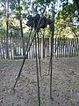 Llorones y zancudos, Lluís Vidal, 2003.jpg