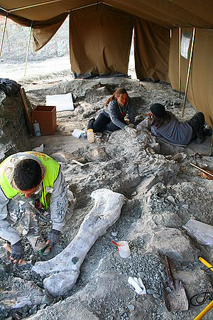 Vertebrate paleontology - Paleontologists at work at the dinosaur site of Lo Hueco (Cuenca, Spain).