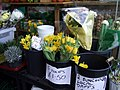 Local daffs - geograph.org.uk - 703454.jpg