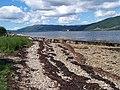 Loch Fyne, Capull Cruaidh Jetty - geograph.org.uk - 192776.jpg