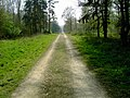 Looking SSW in Chicksands Wood - geograph.org.uk - 400465.jpg