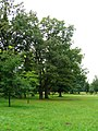 Lubostroń, park, ok. 1800d.JPG