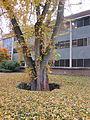 MSU 2014 Tree Pit.jpg
