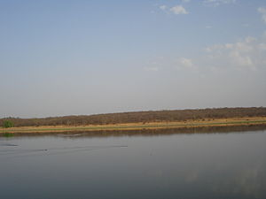 Madhav National Park - A rare scene of a chital followed by a hunter dog in the lake, the race gets intercepted by a mugger crocodile, and the chital is saved.