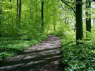 Geography of Denmark - Beech is a common tree throughout Denmark, especially in the sparse woodlands.