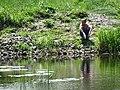Man Fishing - Brest - Belarus (27421849765).jpg