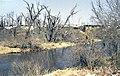 Maple River MN.jpg
