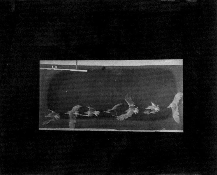 File:Marey, Étienne-Jules - Seemöve im Flug, von oben gesehen (Zeno Fotografie).jpg
