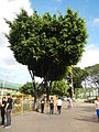 MarikinaCityjf8905 34.JPG