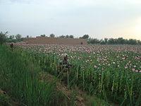Marines in poppy fields.jpg