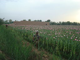 Marines in poppy fields.jpg