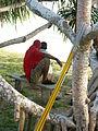 Marshall Islands PICT1478 (4776621181).jpg