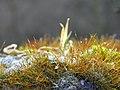 Microcosmos - Flickr - Stiller Beobachter.jpg