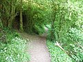 Mid Devon , Grand Western Canal Footpath - geograph.org.uk - 1332520.jpg