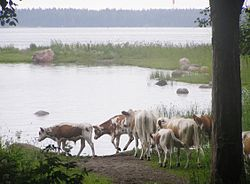 Suomen Maatalous