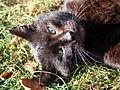 Mikołów koty 02.10.2011 pl.jpg