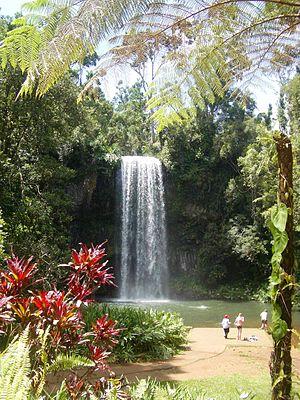 Millaa Millaa Falls - Milla Milla Falls