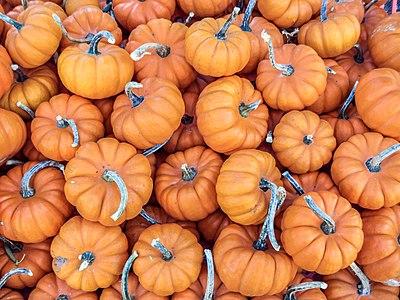 "A bunch of ""mini"" pumpkins at an open-air farmers' market."