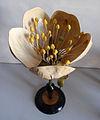 Modell von Prunus avium - Prunus cerasus (Kirschbaum) -Osterloh Nr. 30- (2).jpg