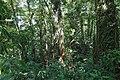 Monteverde Reserve Costa Rica 15.jpg
