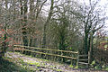 Morchard Bishop, Morchard Wood - geograph.org.uk - 357287.jpg