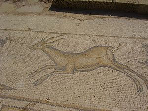 Mountain gazelle - Byzantine-era mosaic of gazelle in Caesarea, Israel