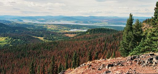 Mt Fraser - Pine Beetle Damage