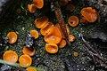 Mushroom (35638277300).jpg