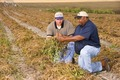 NRCSFL07007 - Florida (715586)(NRCS Photo Gallery).tif