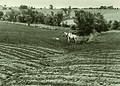 NRCSMD01001 - Maryland (4479)(NRCS Photo Gallery).jpg