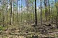 NSG Zeisigwald bei Chemnitz..2H1A2536WI.jpg