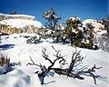 NTS - Rainier Mesa 1.jpg