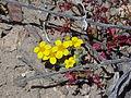 NTS - Wild Flowers 033.jpg