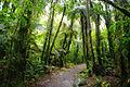 NZL-franz-josef-regenwald.jpg