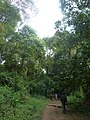 Nairobi Arboretum Park 15.JPG