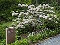 National Arboretum in June (23491168631).jpg