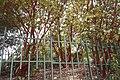 National Botanic Garden of Israel 21.jpg