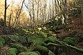 Natural monument Vlčí rokle in winter 2016 (2).JPG
