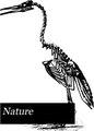 Nature (IA naturevolume14unkngoog).pdf