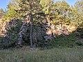 Nature reserve Morkepuertz-5.jpg