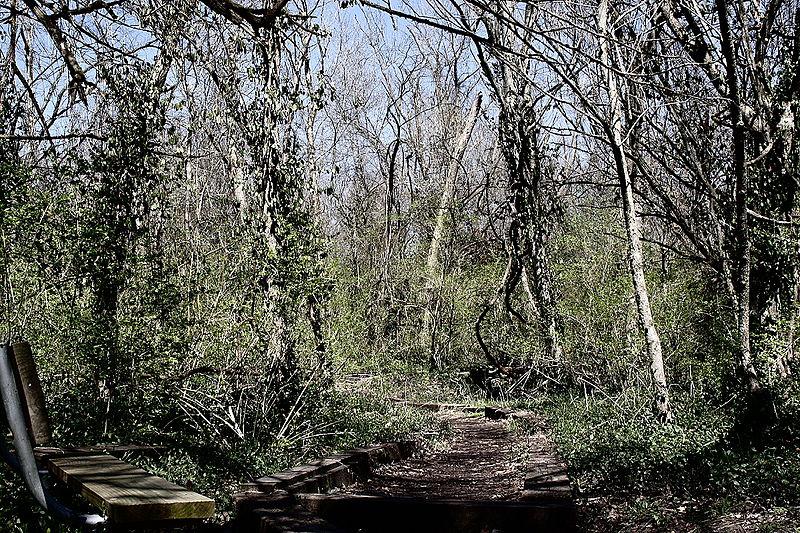 File:Nature trail, Rock Springs Nature Park, O'Fallon, Illinois (2006).jpg