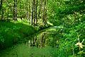 Naturschutzgebiet 15.JPG