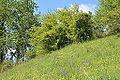 Naturschutzgebiet Aabereich Mellingen 3.JPG