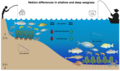 Nekton differences in shallow and deep seagrass.png