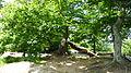 Neuer Wildenstein - Nationalpark Sächsische Schweiz 13.JPG